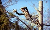 Life Tree Services LLC: One or Two Hours of Tree-Care Services from Life Tree Removal & Service (Up to 52% Off)