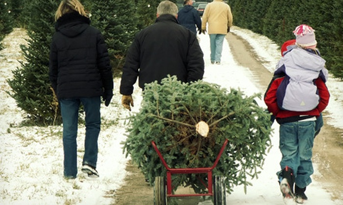 Silver Bells Christmas Trees - Arvada: Fresh-Cut Christmas Trees at Family Christmas Trees (Half Off). Two Options Available.
