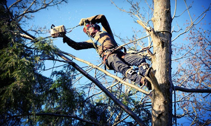 Custom Cuts Tree Care - Tulsa: Tree-Trimming Services from Custom Cuts Tree Care (Half Off). Two Options Available.