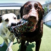 Up to 53% Off Doggy Daycare or Pet Boarding