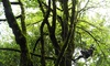 AdventureTerra - Seattle: Bainbridge Island Tree-Climbing Adventure with Transportation for One or Two from AdventureTerra (Up to 53% Off)