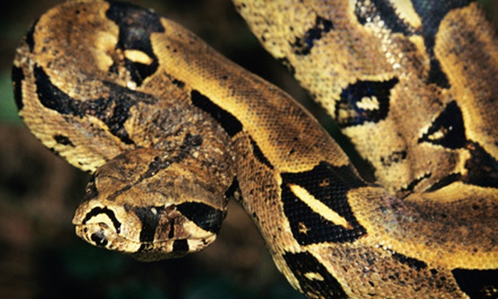 Reptile & Amphibian Discovery Zoo – RAD Zoo - Clinton Falls: $22 for a Zoo Visit for Four and Photo with Reptile at Reptile & Amphibian Discovery Zoo in Owatonna (Up to $44 Value)