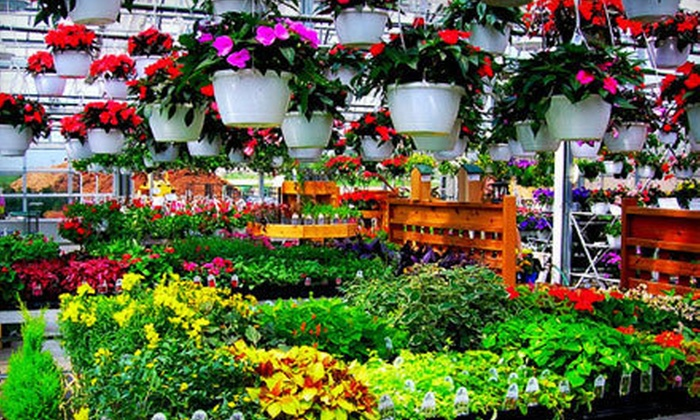 Half Off Plants And Garden Goods Mccue Garden Center Groupon