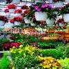 Half Off Plants and Garden Goods