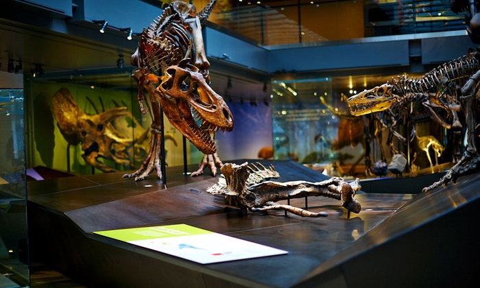 Los Angeles County Museum Of Natural History Foundation