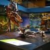 Up to 45% Off Museum Membership of Natural History Foundation