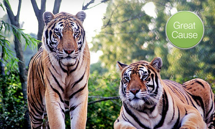 Carolina Tiger Rescue - Raleigh / Durham: $10 Donation to Help Feed Rescued Wild Cats