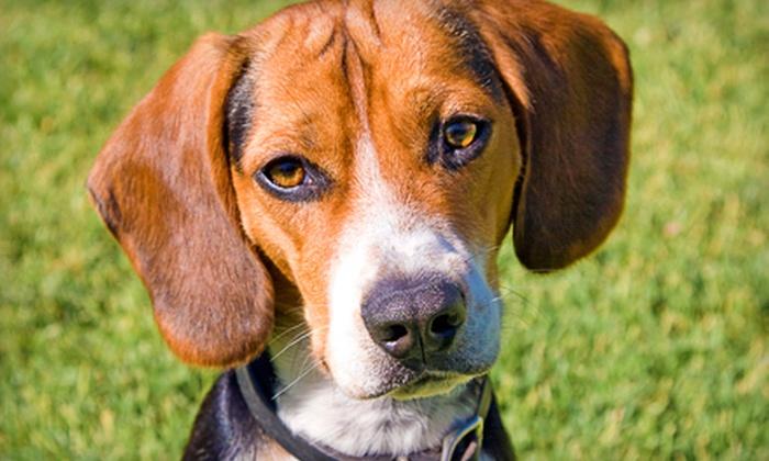 AA Pet Kennel & Resort, Inc. - Marietta: One or Three Nights of Dog Boarding at AA Pet Kennel & Resort, Inc. (Up to 61% Off)