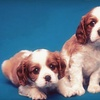 52% Off Pet-Grooming Services