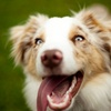 Up to 61% Off Doggie Daycare or Boarding