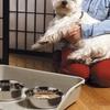 Marchioro Kiosk Pet Feeding Tray