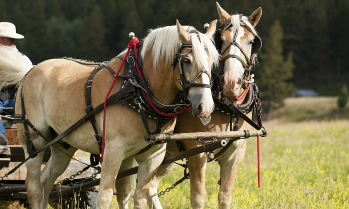Milwaukee Coach and Carriage - Multiple Locations: $49 for a Horse-Drawn Carriage Ride for Up to Six from Milwaukee Coach and Carriage ($90 Value)