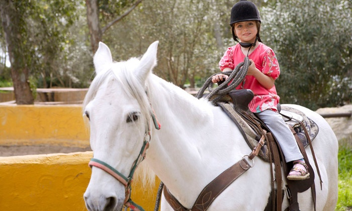 MG Riding Stables - Chandler: Three, Six, or Nine Private Horseback-Riding Lessons at MG Riding Stables (Up to 54% Off)