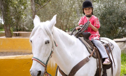 Three, Six, or Nine Private Horseback-Riding Lessons at MG Riding Stables (Up to 56% Off)