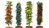Set di 4 piante da frutto