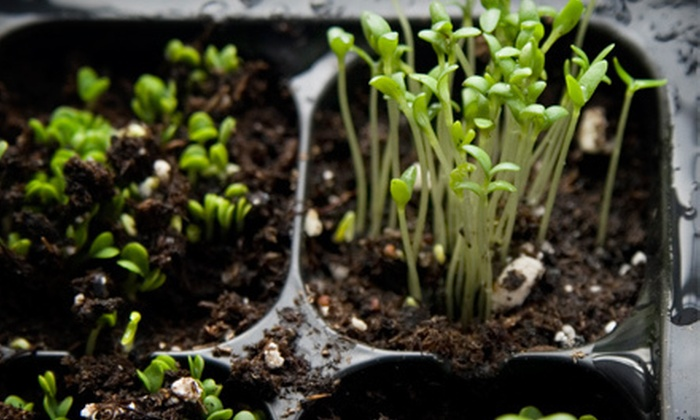 City Farm - St. Johns: $15 for $30 Worth of Live Plants, Seeds, and Gardening Supplies at City Farm