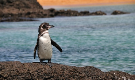 Groupon Deal: ✈ Galapagos Islands 6-Day Tour with Airfare from Indus Travels. Price per Person Based on Double Occupancy.