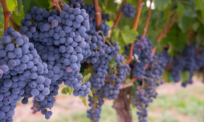 Newport Vineyards - Eustis-Easton's Pond: Vineyard Tour with Tasting for Two or Four at Newport Vineyards (Half Off)