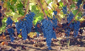 Heller Estate Organic Vineyards: Wine Tasting for Two, Four, or Six at Heller Estate Organic Vineyards (Up to 52% Off)