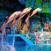 SeaWorld San Antonio - Up to 50% Off