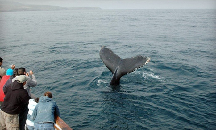 Channel Islands Whale Watching - Oxnard: Seafari Tour with Breakfast or Lunch for One or Two from Channel Islands Whale Watching in Oxnard (Up to 53% Off)