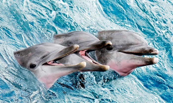 Captains Source - ​Charleston Harbor Resort & Marina : $65 for a Dolphin-Watching Tour or Historical Cruise for Two from Captains Source ($150 Value)