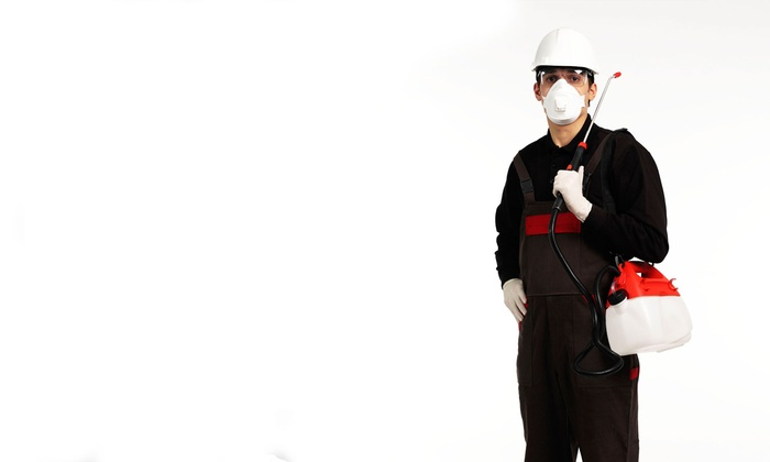 Bugs R Us - Houston: $59 for Ant-Control Service and Pest Appraisal from Bugs R Us ($125 Value)