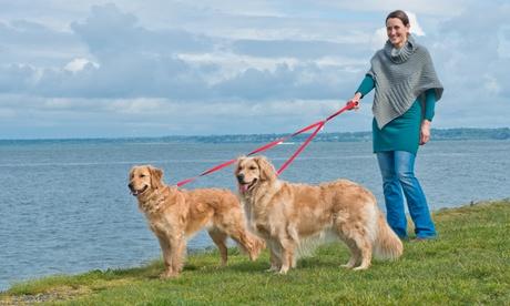 Furhaven No Tangle Two Dog Pet Leash