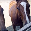 Up to 65% Off Horse-Riding Lessons in Stouffville