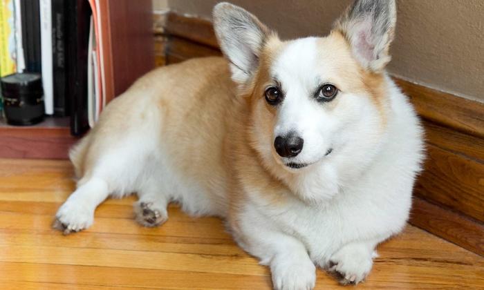 Gentle Pet Grooming - Gentle Pet Grooming: $20 for $40 Worth of Dog Grooming at Gentle Pet Grooming