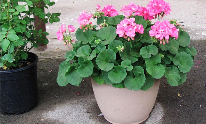 Jerry's Home and Garden Place - Eagan: $12 for $20 Worth of Plants, Flowers, and Trees at Jerry's Home & Garden Place in Eagan