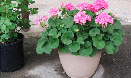 $20 for $20 Worth of Plants, Flowers, and Trees at Jerry's Home & Garden Place in Eagan