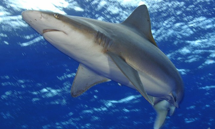 North Shore Shark Adventures - North Shore: $60 for a Shark-Cage Tour from North Shore Shark Adventures ($120 Value)