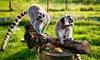Zoo Farma - Mieroszów: Bilet do ogrodu zoologicznego Zoo Farma dla 2 osób za 15,99 zł i więcej opcji (do -50%)