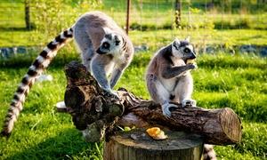 Zoo Farma: Bilet do ogrodu zoologicznego Zoo Farma dla 2 osób za 18,99 zł i więcej opcji (do -49%)