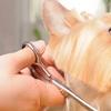 49% Off Pet Grooming
