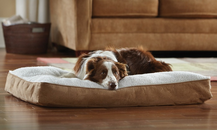 Animal Planet Large Sherpa Bed: $25 for an Animal Planet Large Sherpa Bed ($49.99 List Price). Free Shipping and Free Returns.