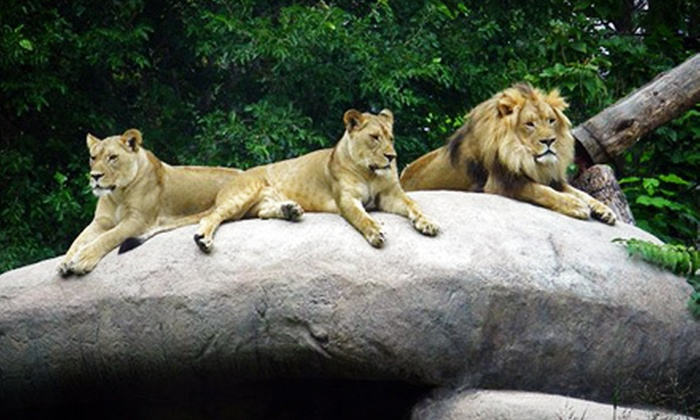 Pueblo Zoo - Pueblo: Pueblo Zoo Visit for Two, Four, or Six (Up to 54% Off)