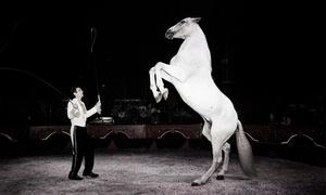 """Circo Gottani 4: Entrada a """"El Circo Gottani"""" en butaca lateral por 4,95 € para niños y 5,95 € para adultos en El Circo Gottani"""