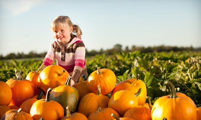 Shuck's Corn Maze and Pumpkin Patch - Big Creek: Visit for 2, 4, or 6; or Party for Up to 10 at Shuck's Corn Maze and Pumpkin Patch (Up to 54% Off)
