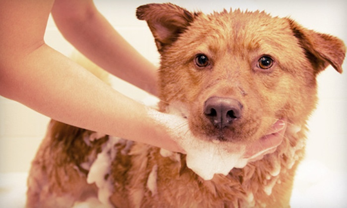 Noble Dog Shoppe & Spa - Howell: Dog Grooming for Small, Medium, or Large Dog at Noble Dog Shoppe & Spa (Up to 56% Off)