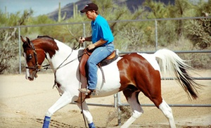 Pirate Performance Horses: Two or Four Horseback-Riding Lessons at Pirate Performance Horses (51% Off)
