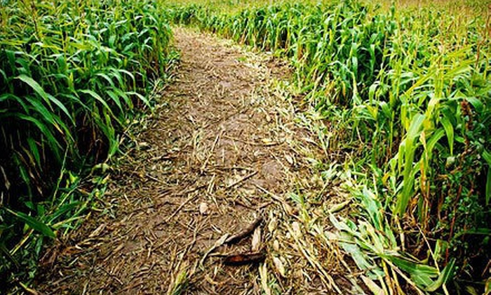 Rio Grande Community Farm Maize Maze - Albuquerque: Corn Maze Visit for Two or Four at Rio Grande Community Farm Maize Maze (Up to Half Off)