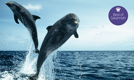$8 for a Dolphin Watch Nature Cruise from Adventure Cruises on Hilton Head Island (Up to $16 Value)