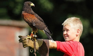 Lakeland Bird of Prey Centre: Lakeland Bird of Prey Centre: Entry with a Flight Session Plus an Afternoon Tea for Two or a Family of Four