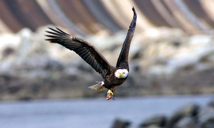 Blue Sky Outfitters - Industrial District West: Skagit River Bald Eagle-Watching Tour for One or Two from Blue Sky Outfitters (Up to 45% Off)