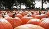 Scott Pumpkin Patch - Hill: Pumpkin-Patch Visit for Two or Four at Scott Pumpkin Patch (Up to Half Off)