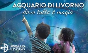 Acquario di Livorno: Acquario di Livorno - Ingresso per una persona (sconto 36%)