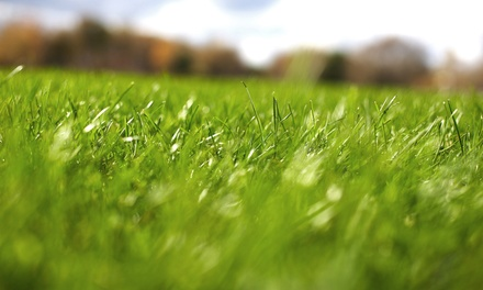 $49 for a Fall Tune-Up Lawn-Care Package with Fertilizer and Aeration from Weed Man ($205 Value)