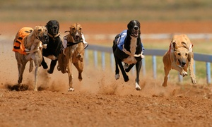 Coral Brighton and Hove Greyhound Stadium: Coral Brighton Greyhound Stadium: Entry For Two With Food and Drink for £10 (73% Off)